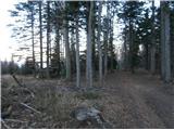Boč...lovsko krmišče v/na Mali Kopi...
