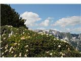 Planina Za Skalo in Kaluderja, tudi tu vse cveti