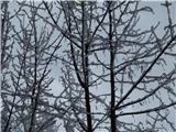 Ljubelj - Koča VrtačaPo sneženju