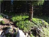 Debela peč, Brda, Lipanski vrh, Mrežcepo prečenju gozdne ceste se prične pot stmeje vzpenjati