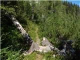 Zadnji travnik - govca_olseva