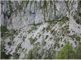 Ojstri vrh 1371mGamsje stečine in lepo vidna pot po kateri bo tudi treba tudi naslednjič