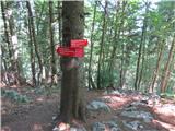 Vogel-Šija-Rodicapo gozdu v dolino
