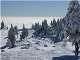Velika planinaModrina, meglina, belina
