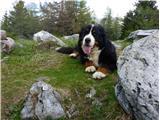 Šmarna goraGaja, zadnjič v planinah, Dobrča 20. maja 2017