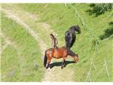 Rdeči breg (Pohorje)spet konjički