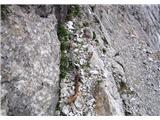 Krnička gora iz Matkove Krniceizdrti nosilni klin
