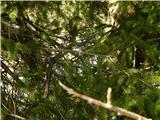 Prelaz Ljubelj (koča)Kača na drevesu