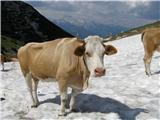 Vogel-Šija-Rodicav grabnu med Lepo Suho in Malo Rodico še velika zaplata snega, ki še kako prav pride za osvežitev