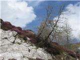 Le kaj je postrani? ;-) ... 1. maja 2012 med potjo na Debelo peč