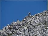 Rodica-Črna prstčreda koz na vrhu Raskovca-nekatere v senci skal, druge pa so  me radovedno opazovale