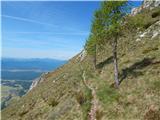 Gozd - mala_poljana