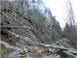 Visoki  Mavrinc - Podrto drevje že na začetku vršiške ceste