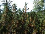 Križevnik, Velika Zelenica in Veliki vrhborovci - zakaj rumenijo
