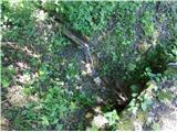 studenice - Izvir Toplega (Studeniškega) potoka
