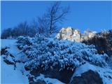 Vrh Ljubeljščice (Triangel)Spodnji Plot