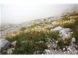 Monte Peralba (2694)veliko cvetja na poti