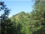 Polhograjska Grmadako stopiš iz gozda pred tabo vrh