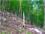 Kamnik ( 861m )solnica
