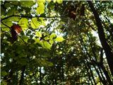 Jevšček - matajur