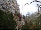 Ojstri vrh 1371mPolica, ki vodi proti neimenovanem vrhu. Gamsi imajo lep prehod.