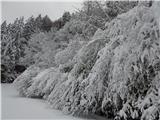 Prelaz Ljubelj (koča)Kjer ni pihalo je precej snega tudi na drevesih