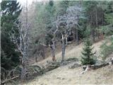 Breznjak / Monte Brizziaopuščena planina Stv. Scolzen
