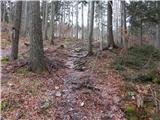 Ljubelj - Koča VrtačaPot skozi gozd je v glavnem že kopna