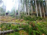 Olševaogromno podrtega drevja na poti