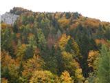 Prelaz Ljubelj (koča)Jesensko obarvan gozd