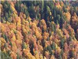 Prelaz Ljubelj (koča)Jesenske barve
