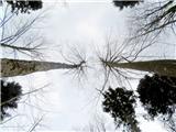 Koča pri Jelenovemu studencubrez modrega neba