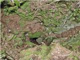 Javorca(Golte)brezno tik pod Verbučevo planino