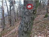 Podvin pri Polzeli - vinski_vrh_vimperk