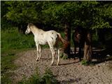 Ljubelj - Koča VrtačaNa pašniku