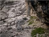 Divja koza - Cima di Riofreddo 2507 mpot A.G.