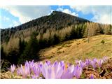 Goli vrh  1787 mnmGoli vrh