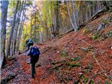 Vajneždel poti po gozdu