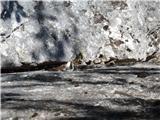Javorca(Golte)tudi veliko plezalnih smeri je v Tirskih pečeh