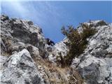 Javorca(Golte)na grebenu v Požganiji