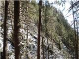 Javorca(Golte)vetrolom na poti proti Zgornji Lopi