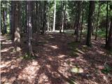 Senično - zavetisce_v_gozdu