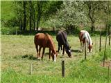 Kapunar (1051 m)Trije konji
