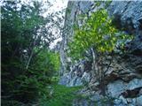 Javorca(Golte)