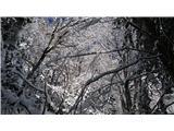 Javorca(Golte)urejeni zimski kaos