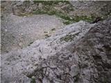 Vernarzoprna prečka, kjer bi, če bi...fino zanihala;)