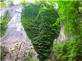 Kamnik ( 861m )bršljanovo srce v stenah Kamnika