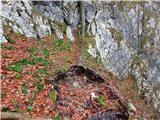 Kamnik ( 861m )tik pod prvimi zajlami se je podrlo drevo in seboj odneslo pot