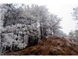 Polhograjska Grmadaivje na drevju