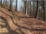 Kamnica - cicelj